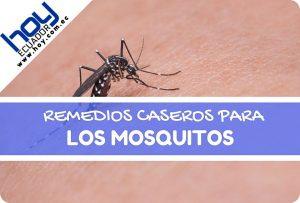 remedios caseros para picadura de mosquitos
