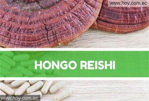 Hongo Reishi