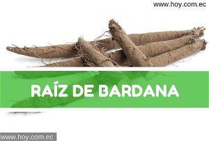 Raíz de Bardana
