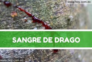 Sangre de Drago