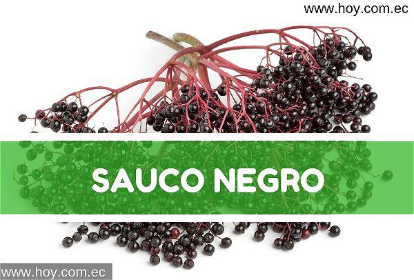 Saúco Negro